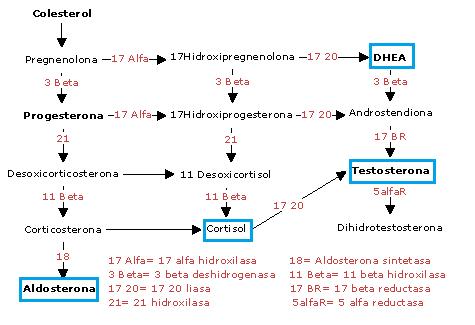 3beta hidroxiesteroide deshidrogenasa
